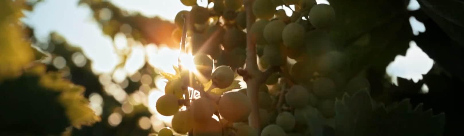 Farnese Vini: Gran Sasso