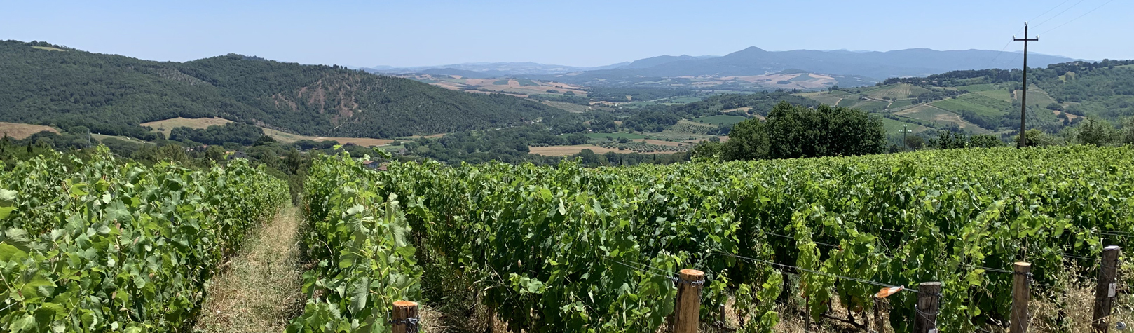 Even terug naar één van de mooiste wijngaarden van Europa